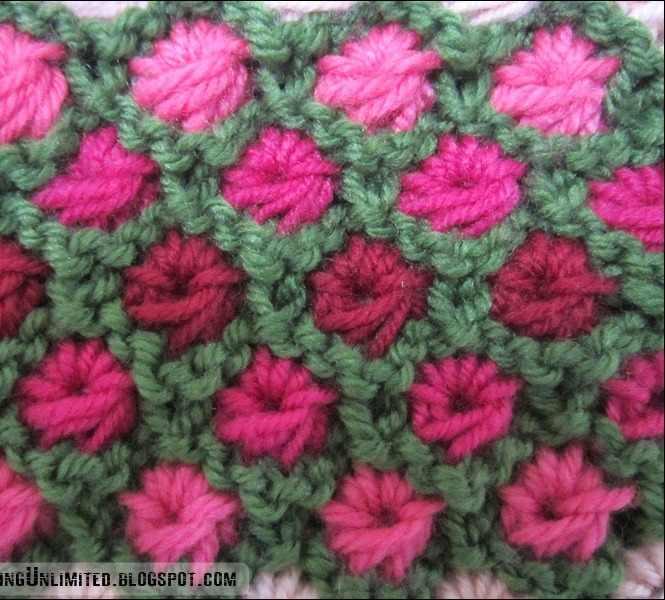 multi color aster flower